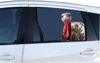 turkeydecal-1